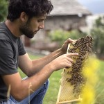 apicoltura in Valle Maira - Daniele LANDRA