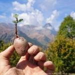 patate azienda agricola daniele landra