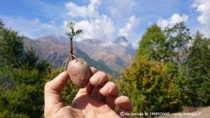 Le patate dell'azienda agricola Daniele Landra